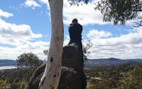 Josh landscape